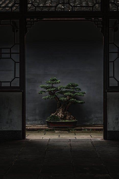 Foto de un árbol bonsai bajo la luz exterior natural superior