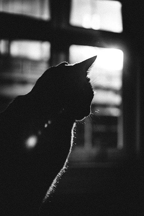 Fotografía en blanco y negro de un gato con luz de fondo fuerte