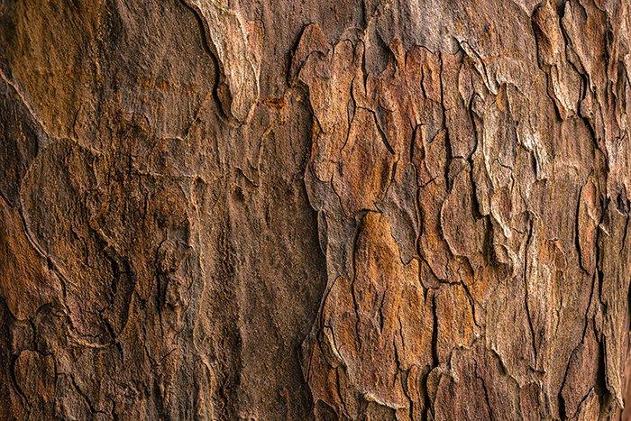 Una foto de clos eup de la corteza rugosa de un árbol: cómo fotografiar texturas