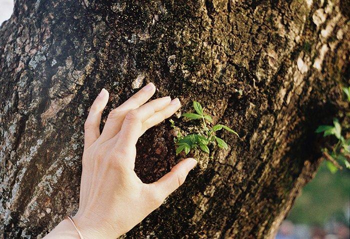 La mano de una persona frotando una corteza de árbol áspera - consejos para la fotografía de textura