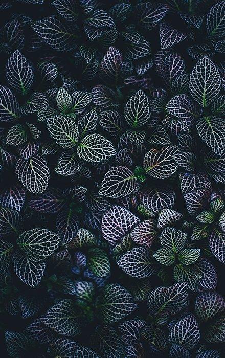 Un hermoso retrato de hojas de color verde oscuro y violeta: se destaca la textura de las hojas.